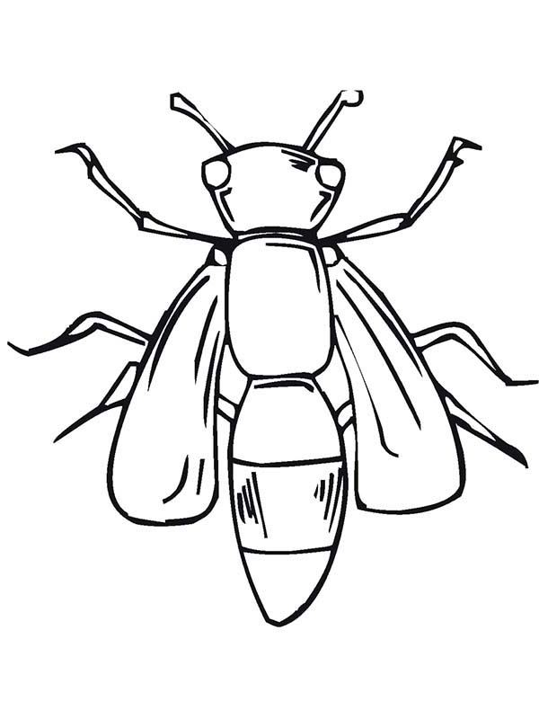 Bugs, : Fly Bugs Coloring Page