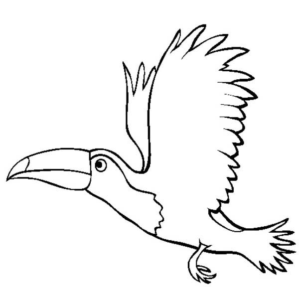 Toucan, : Flying Toucan Coloring Page