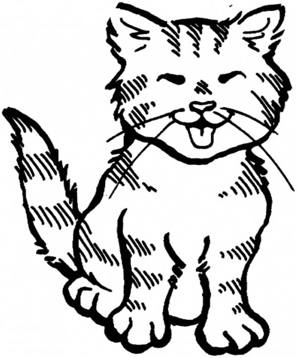 Cat, : Funny Little Cat Coloring Page