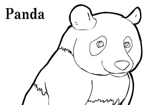 Panda, : Funny Panda Picture Coloring Page