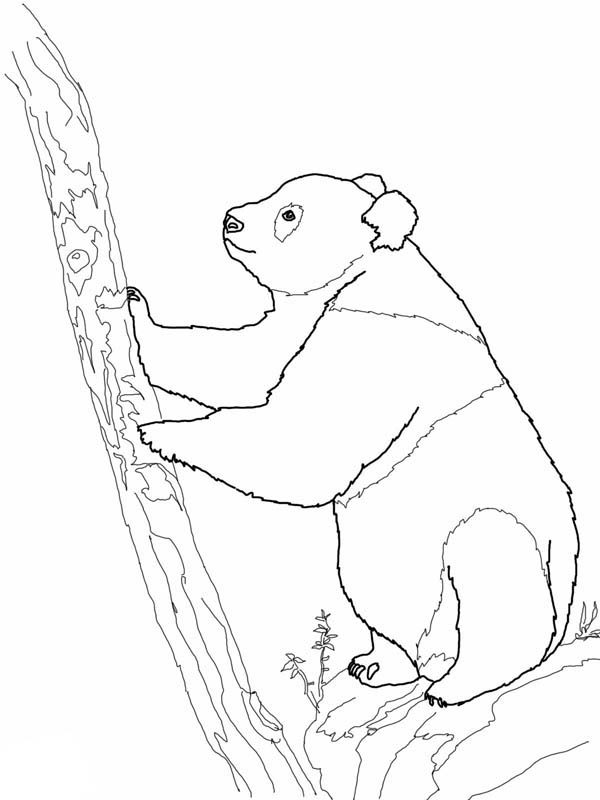 Panda, : Giant Panda Try to Climb Tree Coloring Page