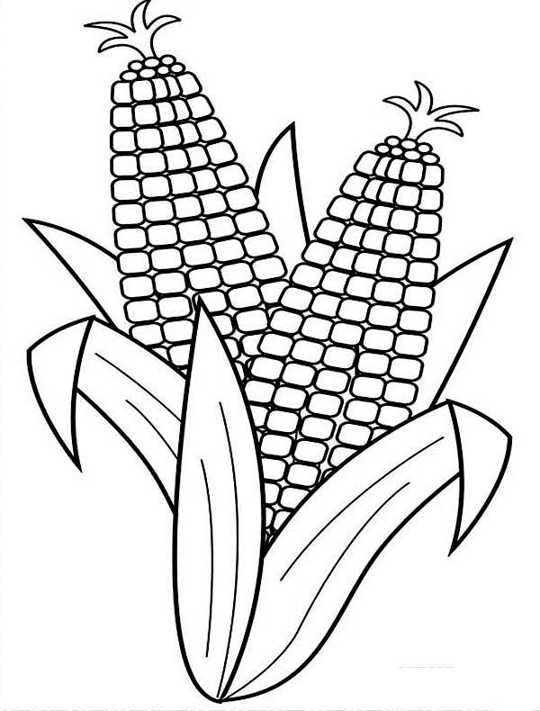 Corn, : Harvesting Corn Coloring Page