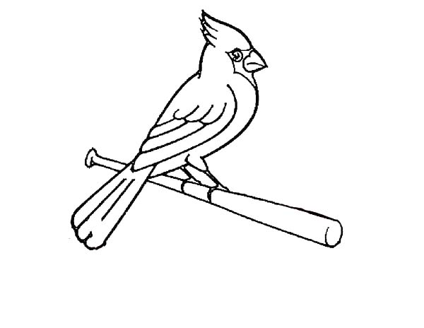Cardinal Bird, : How to Draw Cardinal Bird Coloring Page
