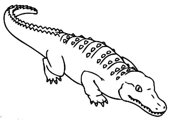 Crocodile, : How to Draw Crocodile Coloring Page