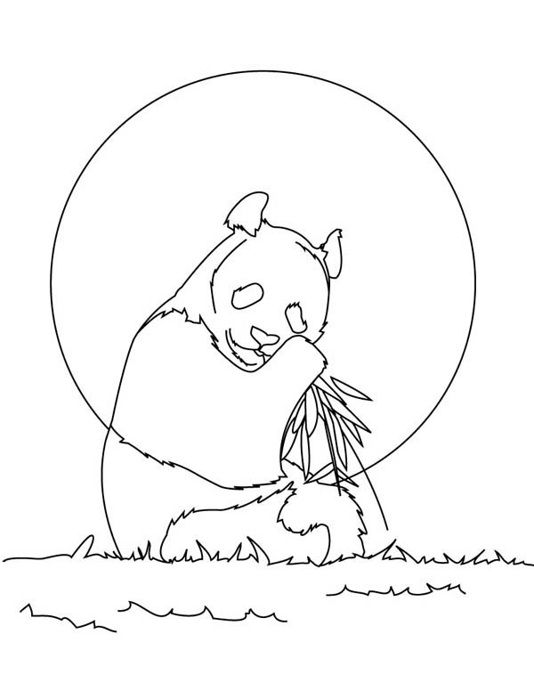 Panda, : How to Draw Panda Coloring Page
