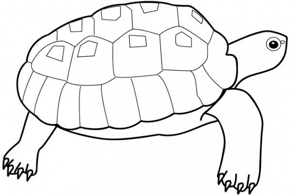Turtle, : How to Draw Turtle Coloring Page