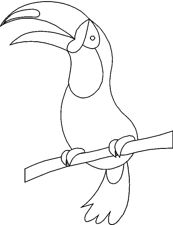 Toucan, : How to Draw a Toucan Coloring Page
