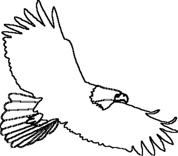 Eagle, : How to Draw an Eagle Coloring Page