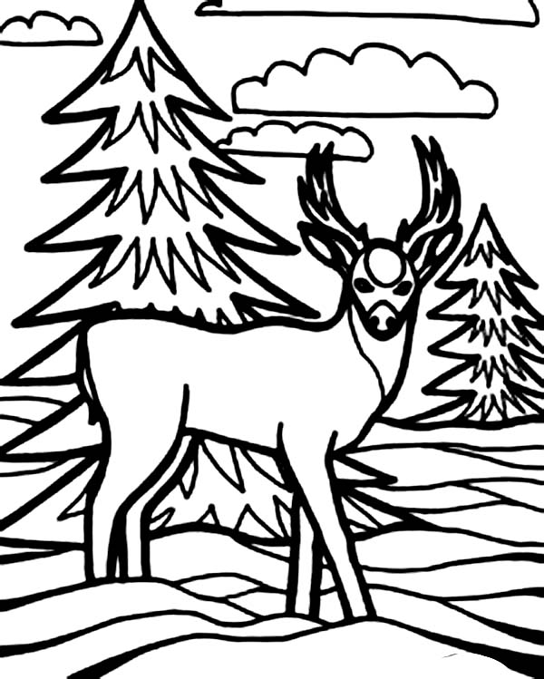 Deer, : Kid Drawing of Deer Coloring Page