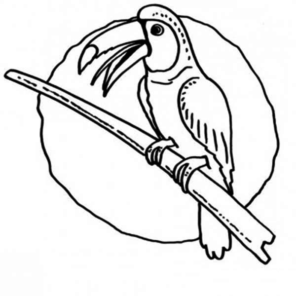 Toucan, : Kids Drawing of Toucan Coloring Page