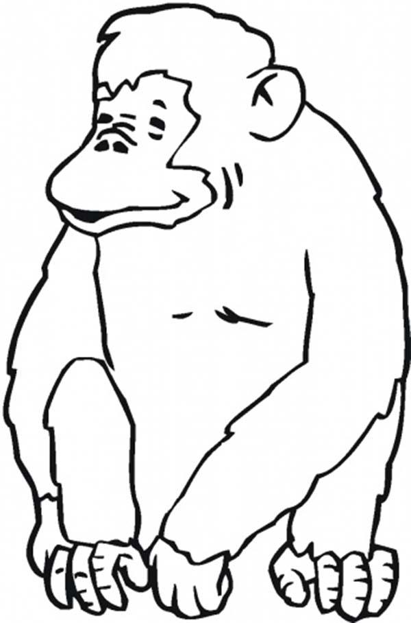 Chimpanzee, : Laughing Chimpanzee Coloring Page
