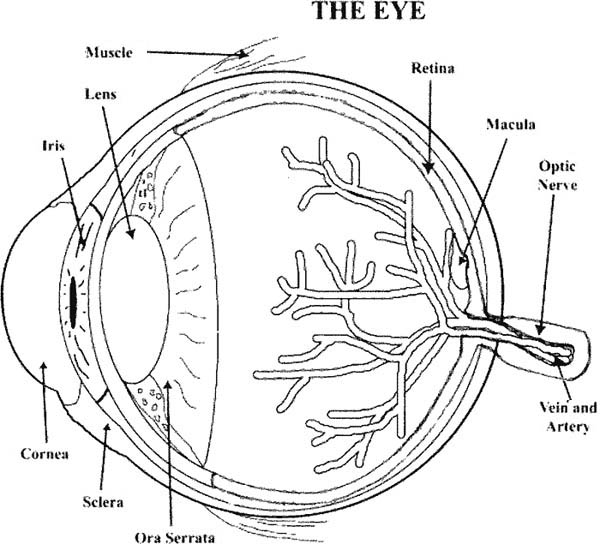 Eyes, : Learn about the Eyes Coloring Page