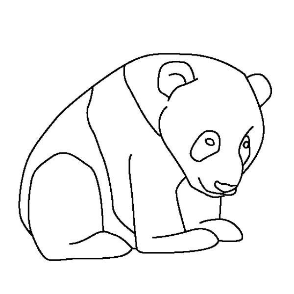 Panda, : Little Baby Panda Coloring Page
