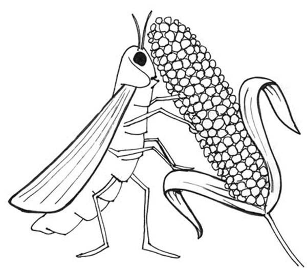10 Plagues of Egypt, : Locust Eat All Livestock in 10 Plagues of Egypt Coloring Page