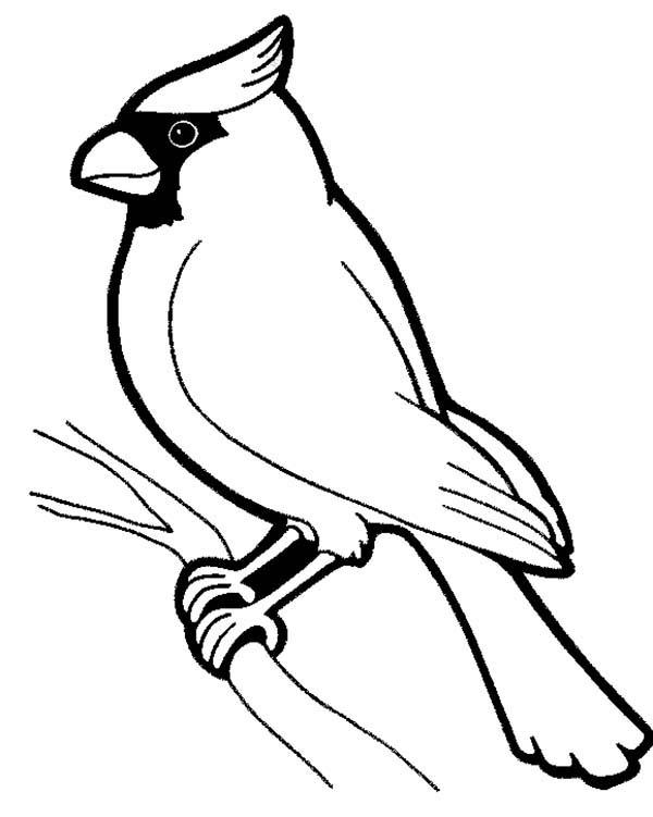 Cardinal Bird, : Male Cardinal Bird Coloring Page