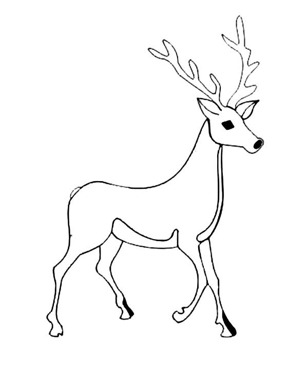 Deer, : Male Deer Picture Coloring Page