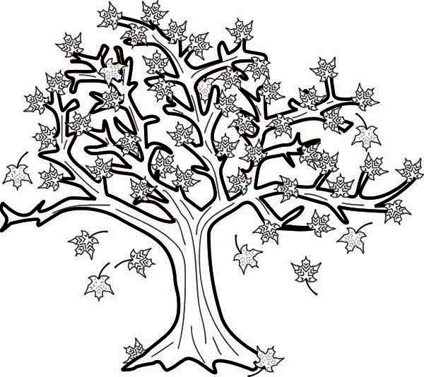 Autumn, : Maple Tree in Autumn Season Coloring Page