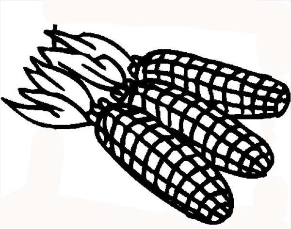 Corn, : Mature Field Corn Ears Coloring Page