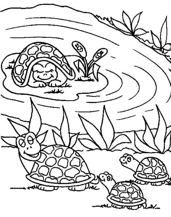 Turtle, : Mother Turtle Bring Her Babies to Pond Coloring Page