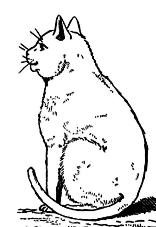 Cat, : Mother of Cat Coloring Page