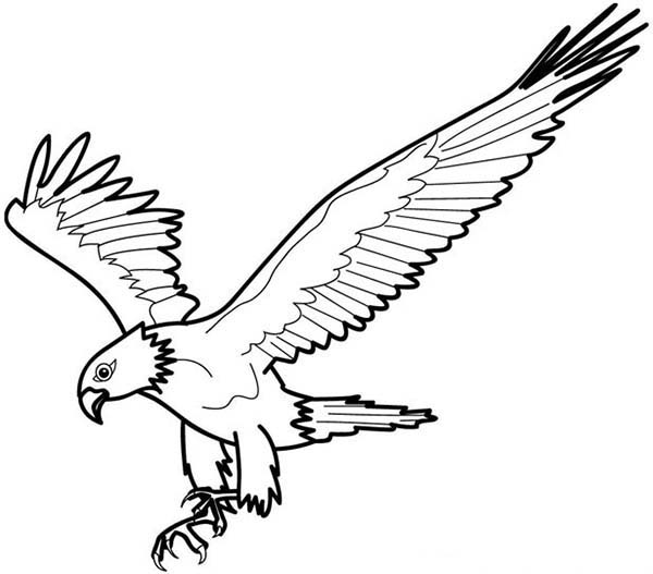 Eagle, : Near Extinction Bald Eagle Coloring Page