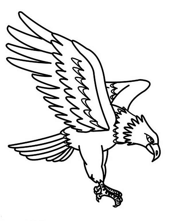 Eagle, : North American Largest Raptor Golden Eagle Coloring Page