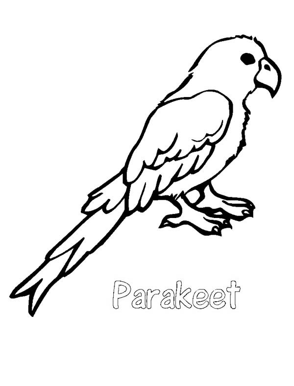 Parakeet, : P is for Parakeet Coloring Page