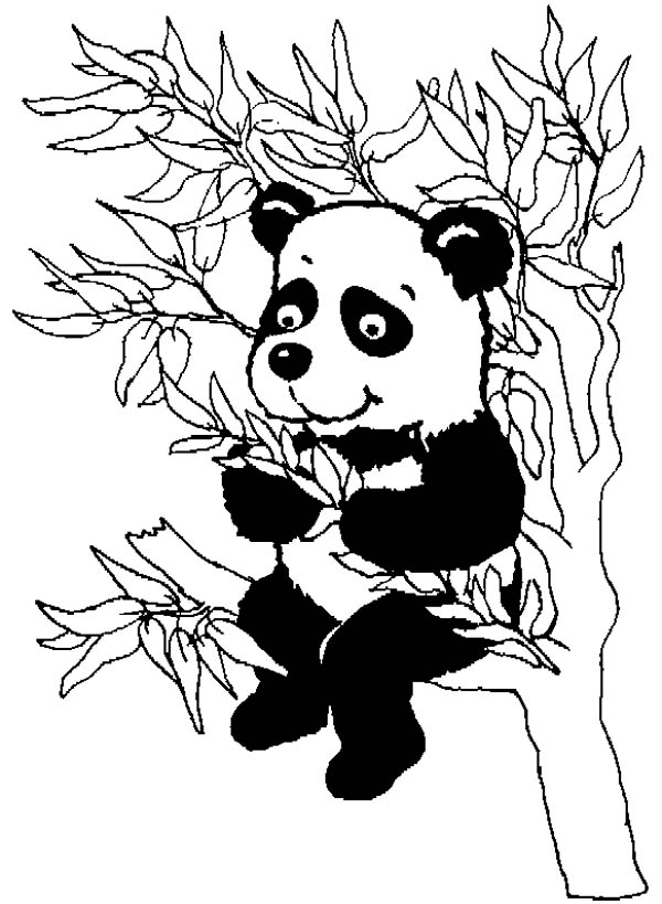 Panda, : Panda Eating Bamboo Leaves Coloring Page