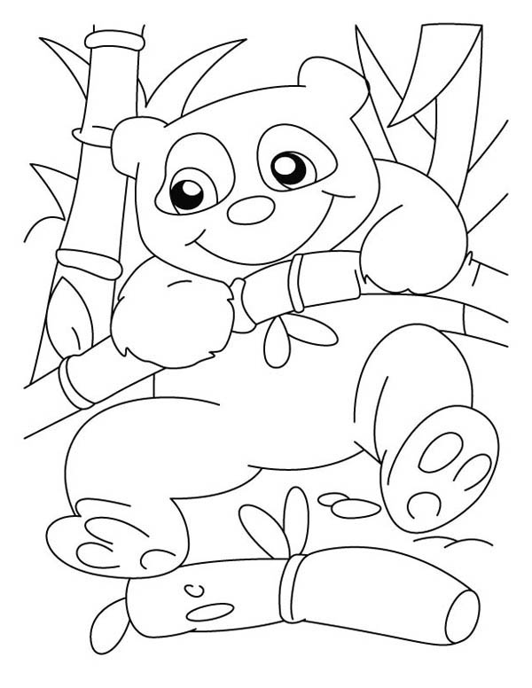 Panda, : Panda Hanging on Bamboo Tree Coloring Page