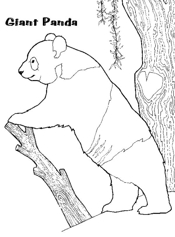 Panda, : Panda Standing Under the Tree Coloring Page