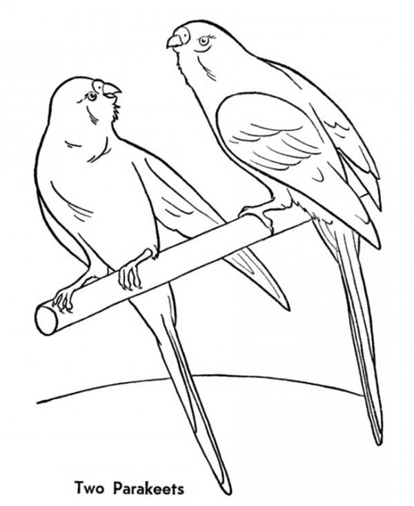 Parakeet, : Parakeet Couple Coloring Page