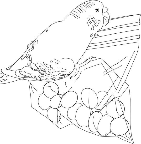 Parakeet, : Parakeet Eat Candy Coloring Page