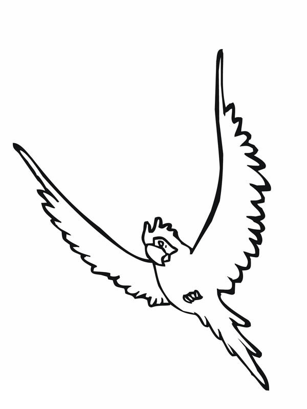 Parakeet, : Parakeet Flying High Coloring Page