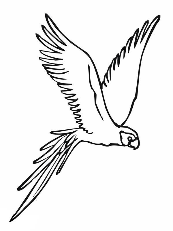Parakeet, : Parakeet Spread Wing Coloring Page