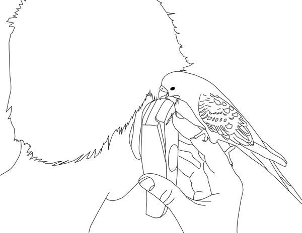 Parakeet, : Parakeet Talking on Cellphone Coloring Page
