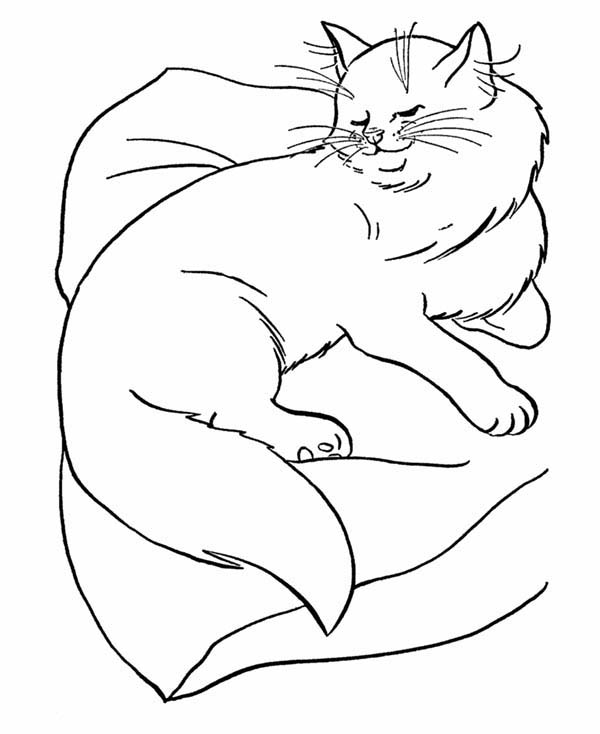 Cat, : Persian Cat is Sleeping Coloring Page