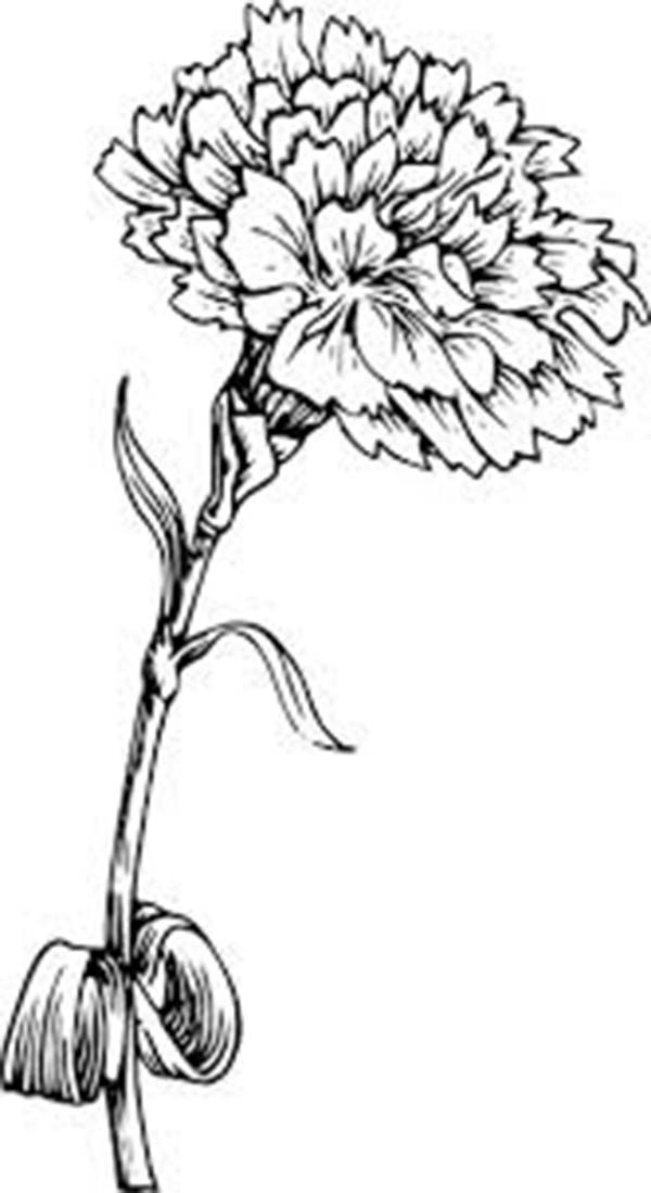 Carnation Flower, : Picture of Carnation Flower Coloring Page