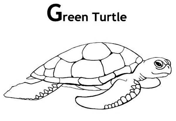Turtle, : Picture of Green Turtle Coloring Page