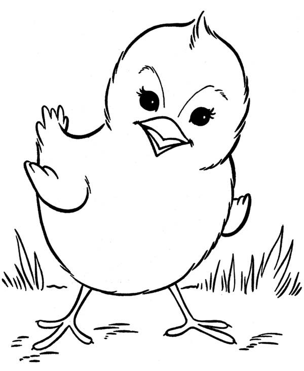Chicken, : Picture of Little Chicken Coloring Page