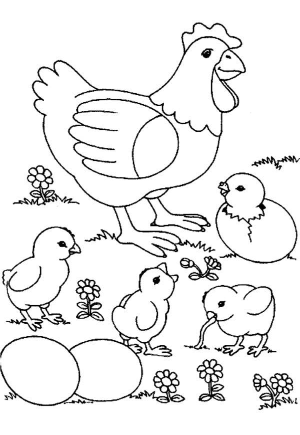 Chicken, : Picture of Mother Chicken and Her Hungry Baby Coloring Page