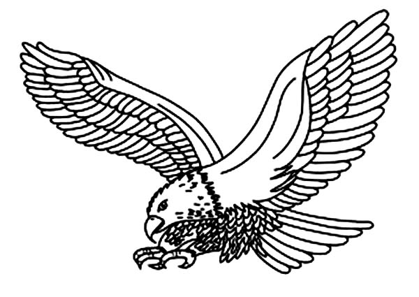 Eagle, : Picture of an Eagle Coloring Page