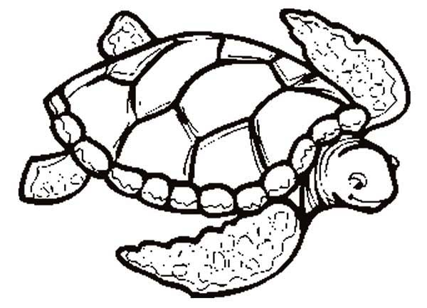 Turtle, : Please Love This Sea Turtle Coloring Page