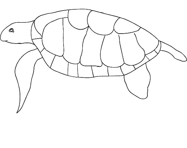 Turtle, : Protected Animal Green Turtle Coloring Page