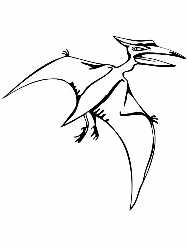 Pteranodon, : Pteranodon Flying Reptile Coloring Page