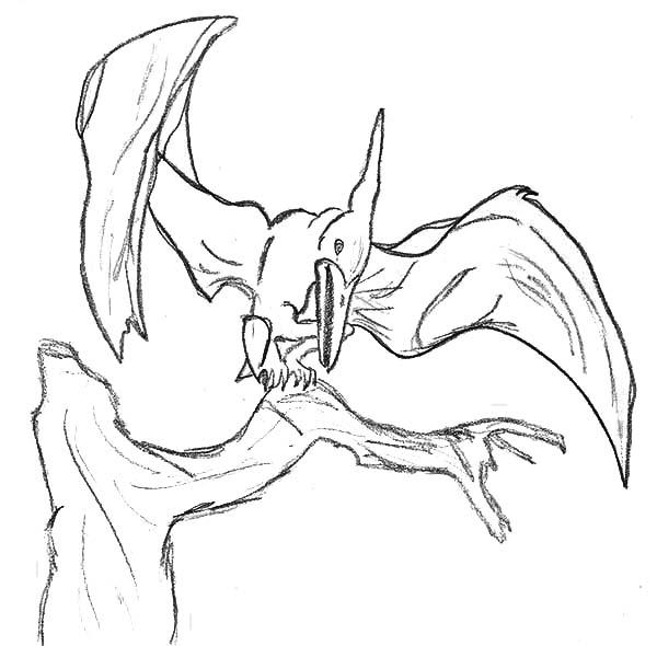 Pteranodon, : Pteranodon on Tree Branch Coloring Page