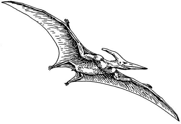 Pteranodon, : Pterodactyl Pteranodon Coloring Page