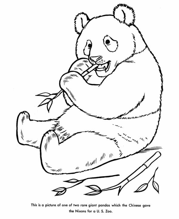 Panda, : Rare Giant Panda Coloring Page