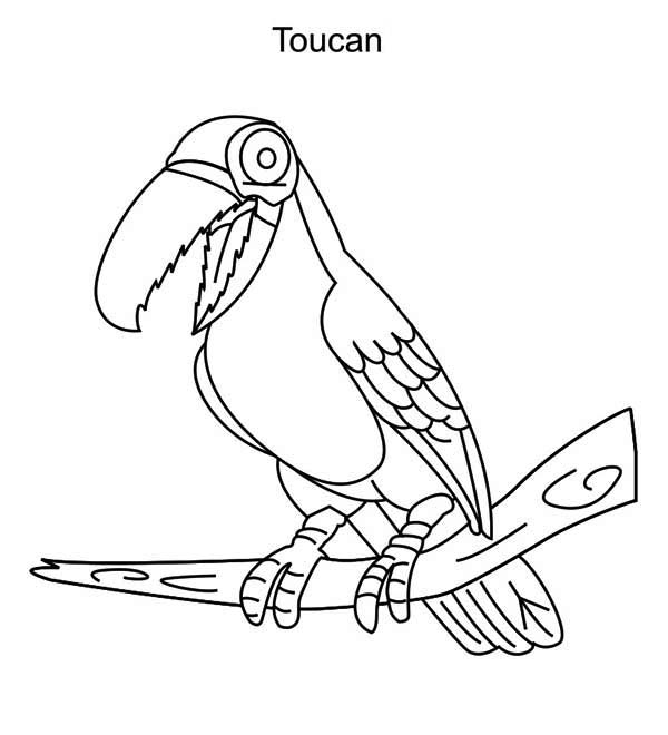 Toucan, : Robot Toucan Coloring Page