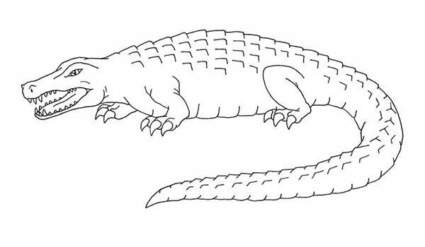 Crocodile, : Saltwater Crocodile Coloring Page