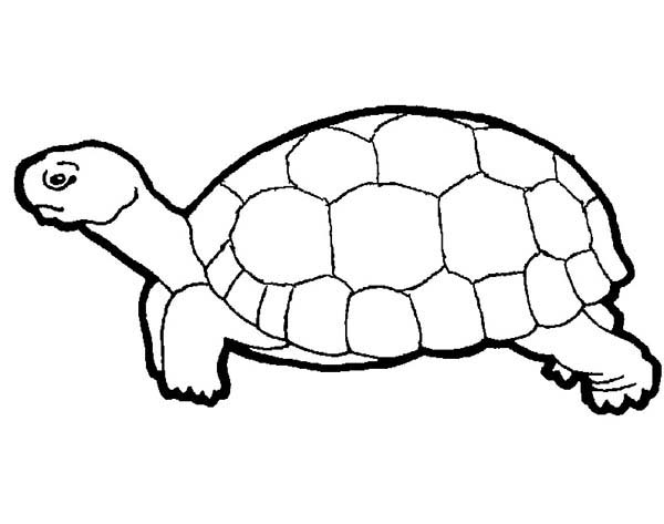 Turtle, : Save This Turtle Coloring Page